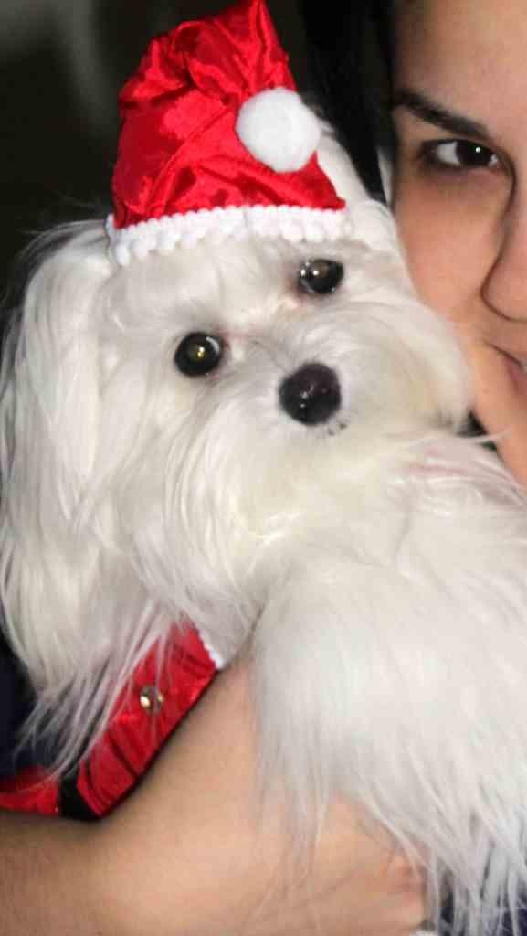 A very doggie Christmas-imageuploadedbypg-free1356502570.126076.jpg