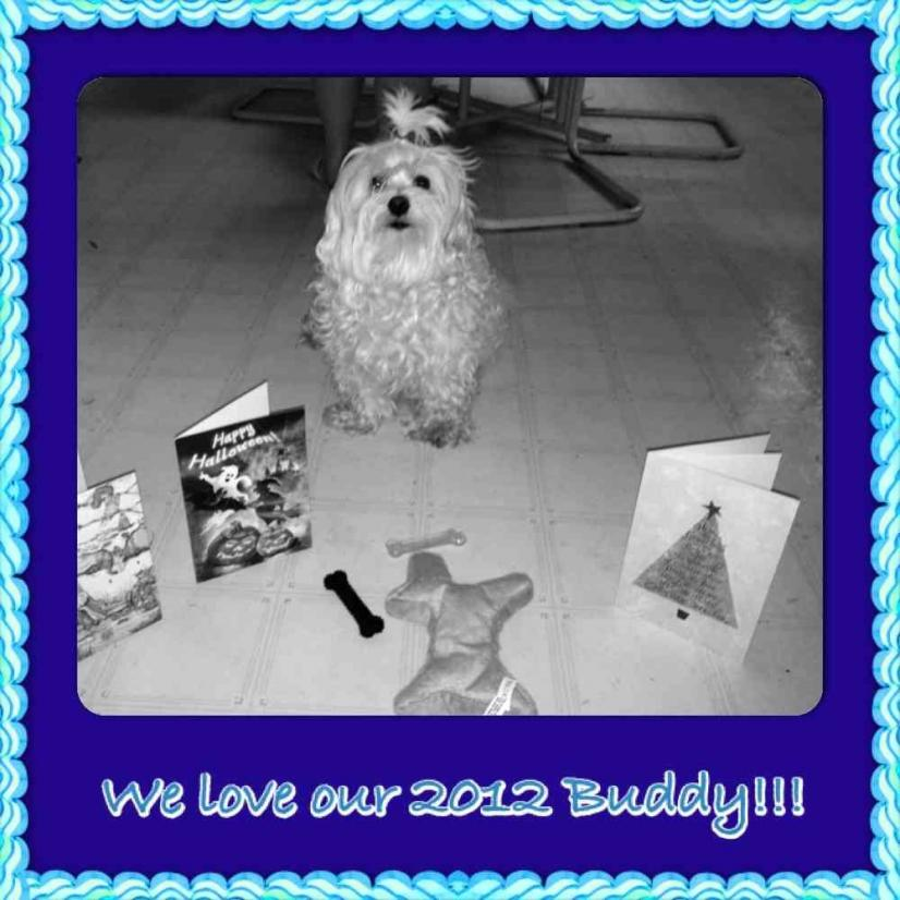 What a wonderful buddy!-imageuploadedbypg-free1356733309.728613.jpg