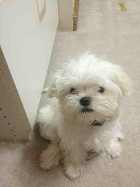 Puppy shots!!-imageuploadedbypg-free1357258176.027706.jpg