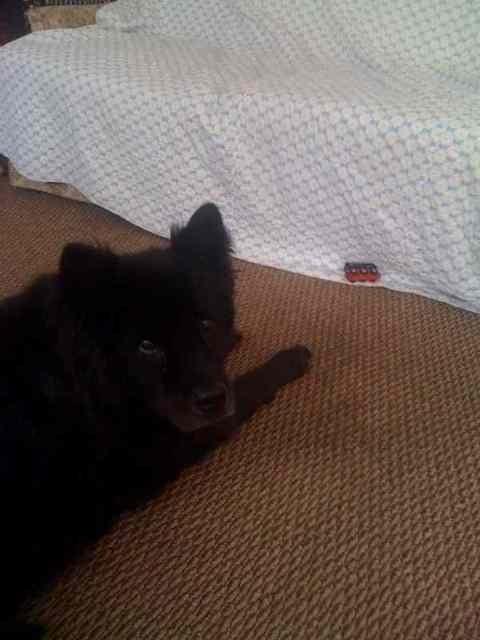 My last grand dog-imageuploadedbypg-free1358177899.535547.jpg
