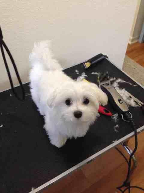 Puppy Cuts-imageuploadedbypg-free1427604429.720250.jpg