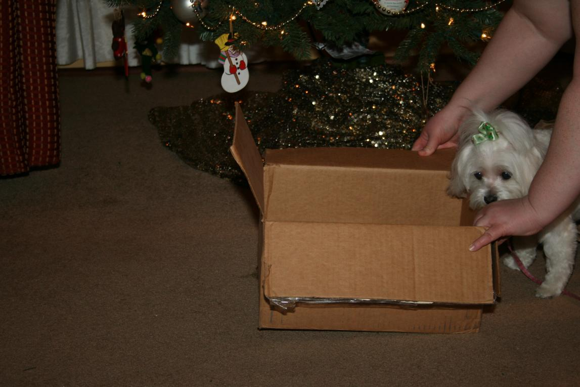 Thank You for the Presents!!-img_0003.jpg