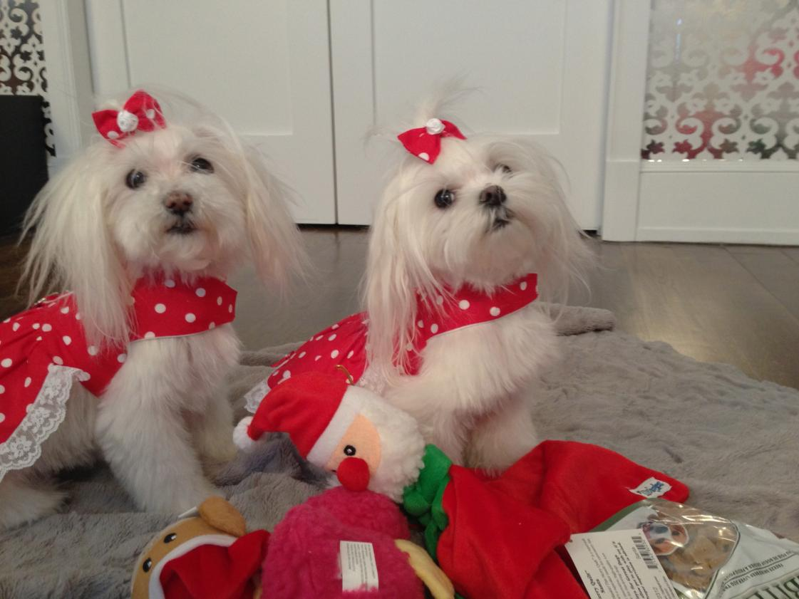 Sasha and Lola Pink's Reveal-img_0581.jpg