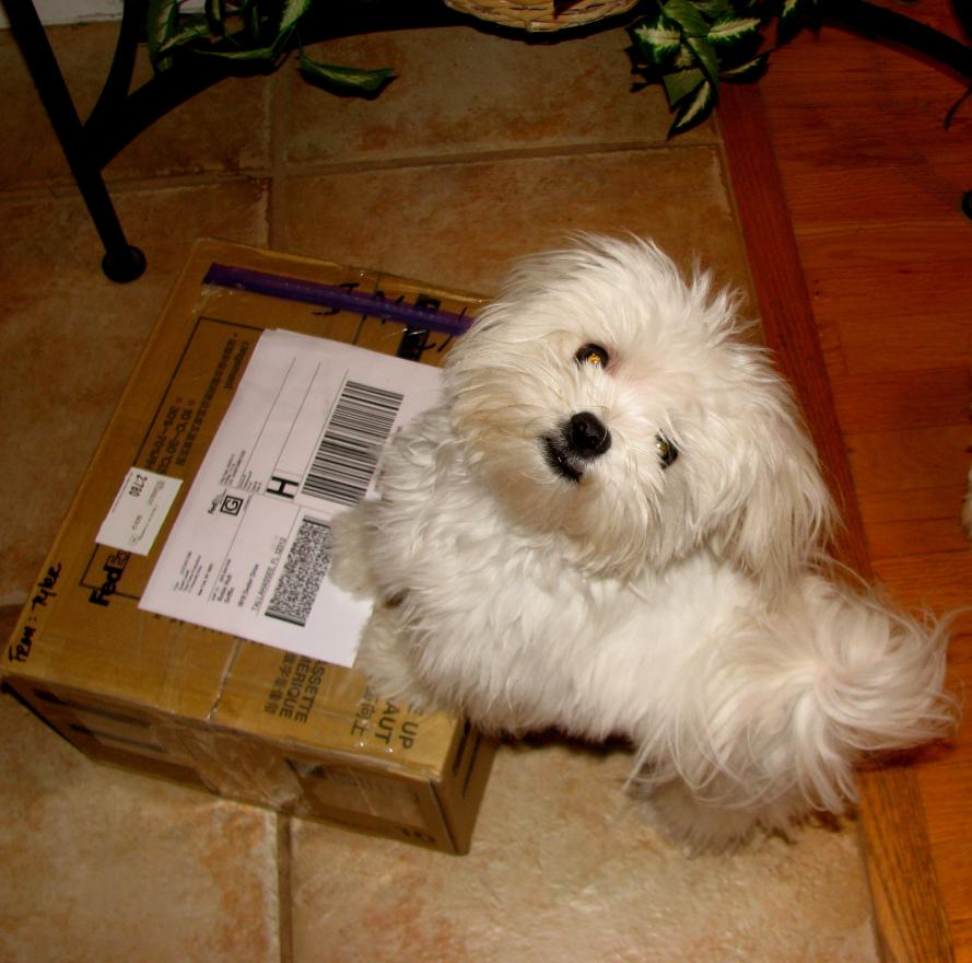 A package came for Griffin!-img_1664.jpg