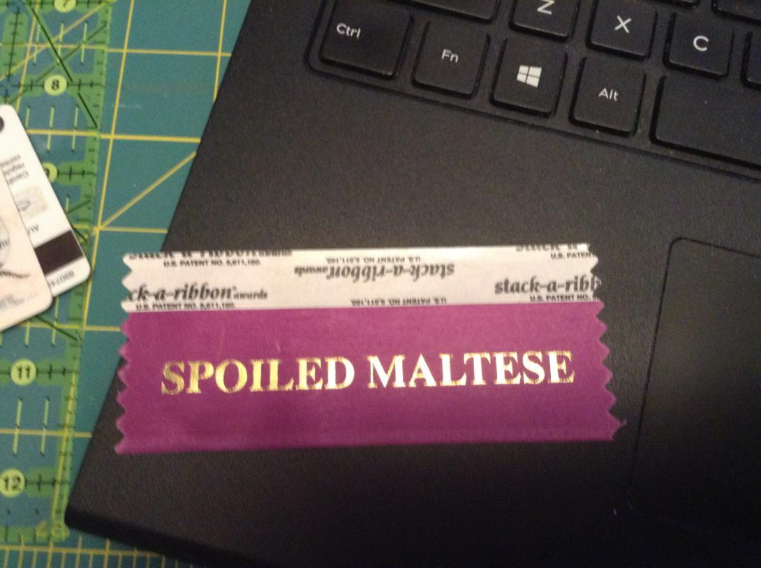 2017 Maltese Nationals  - Spoiled Maltese Badge-img_3016.jpg