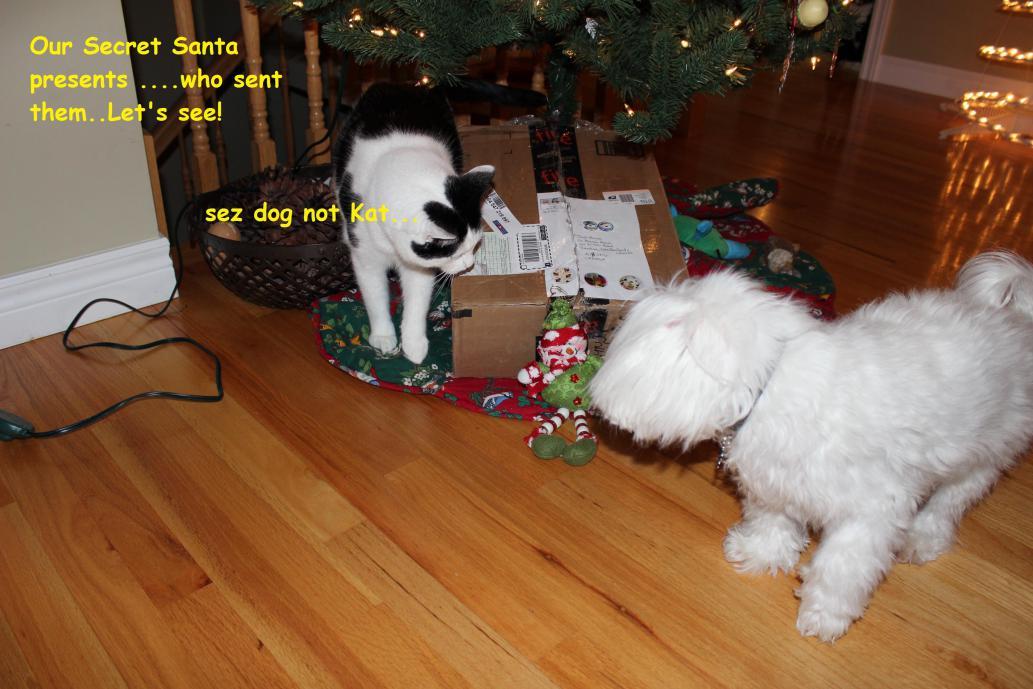 Jodi S Secret Santa Reveal Maltese Dogs Forum Spoiled