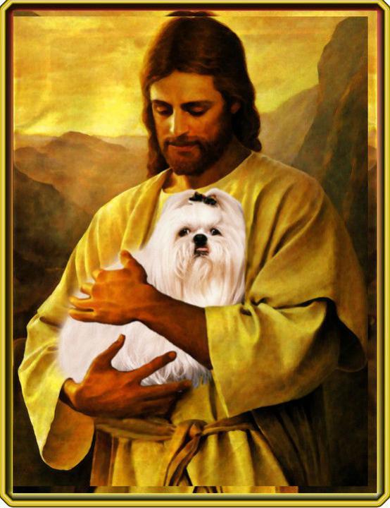 SM is Amazing & Teddy's legacy-jesus-holding-maltese.jpg