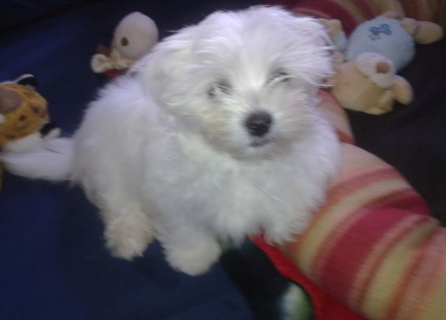 Hello all my name is Koby-koby-my-angel-baby-002-19-12-12.jpg