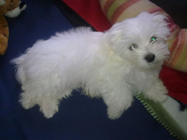 Hello all my name is Koby-koby-my-angel-baby-003-19-12-12.jpg