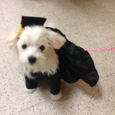 Leila graduated today (with pics)-leilas-graduation-puppy-school-11.11.12.jpg