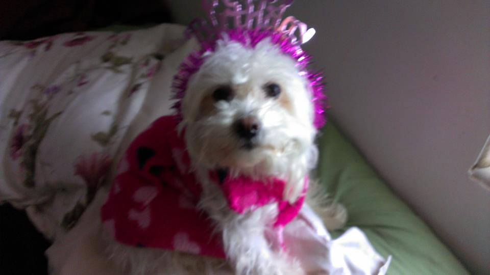 It's my 4th birthday today!-maddie-birthday.jpg