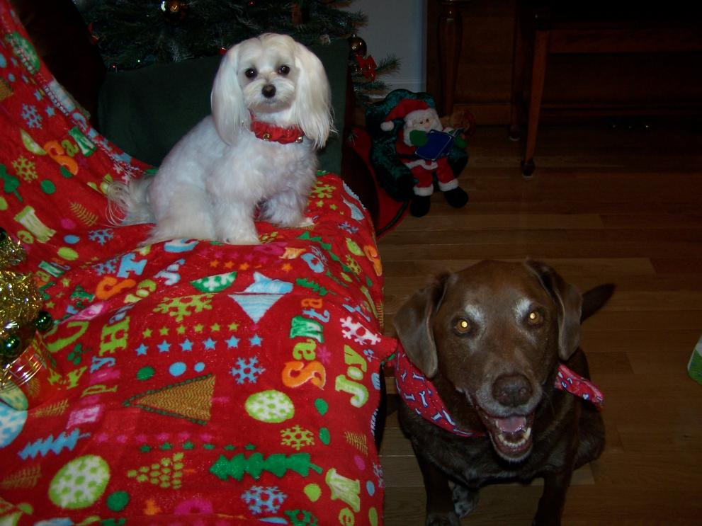 Holiday Picture Contest-mia-brandy-christmas-2012.jpg