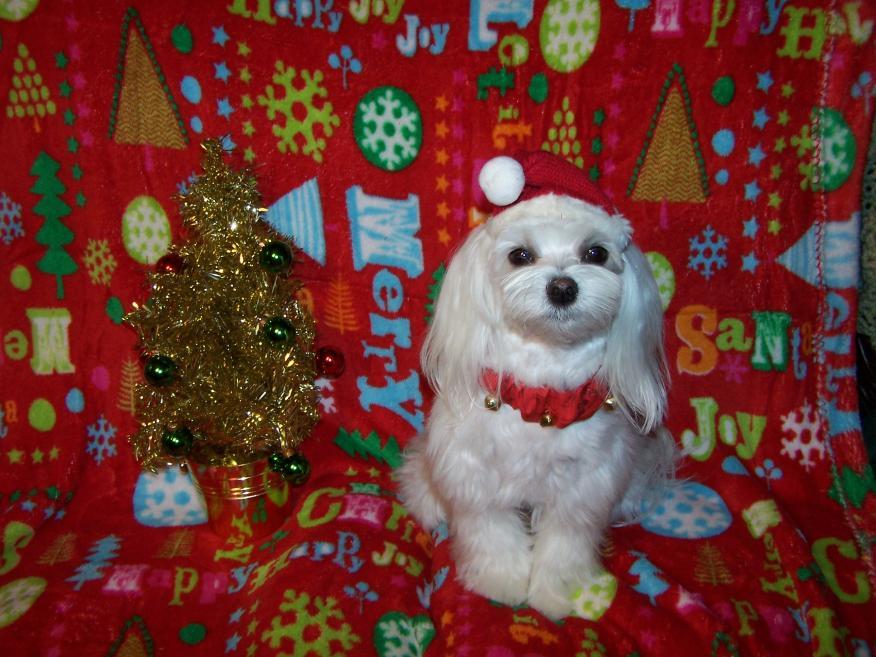 Mia's Christmas pic-mia-christmas-3.jpg