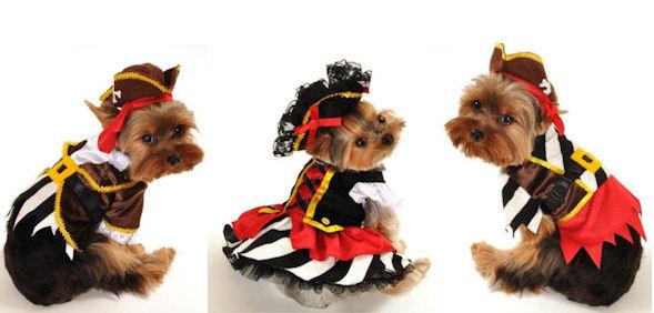 alpine boy dog halloween costume sneak k new halloween costumes maltese dogs forum spoiled