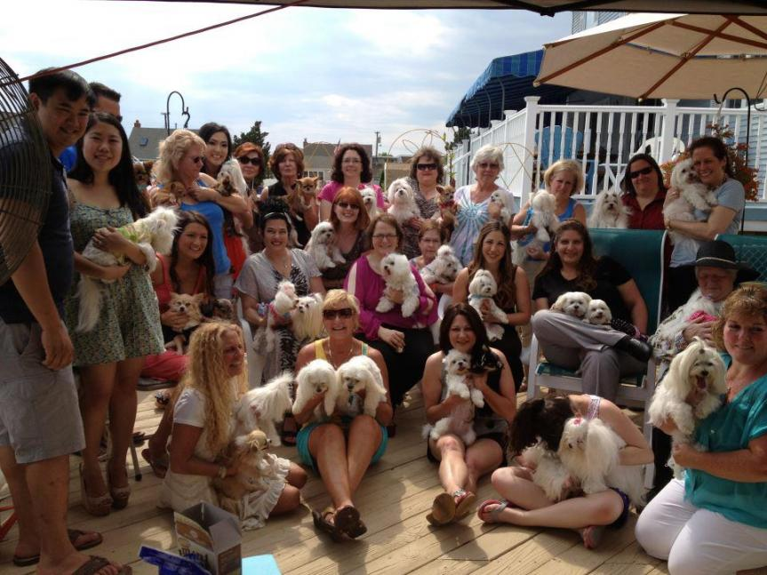 Click image for larger version  Name:puppy party .jpg Views:50 Size:95.1 KB ID:257738