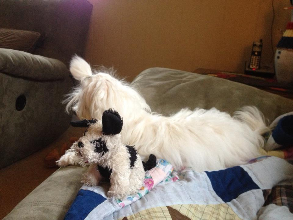 So here is Mia's favorite toy! What's your fluff's favorite?-puppy3.jpg