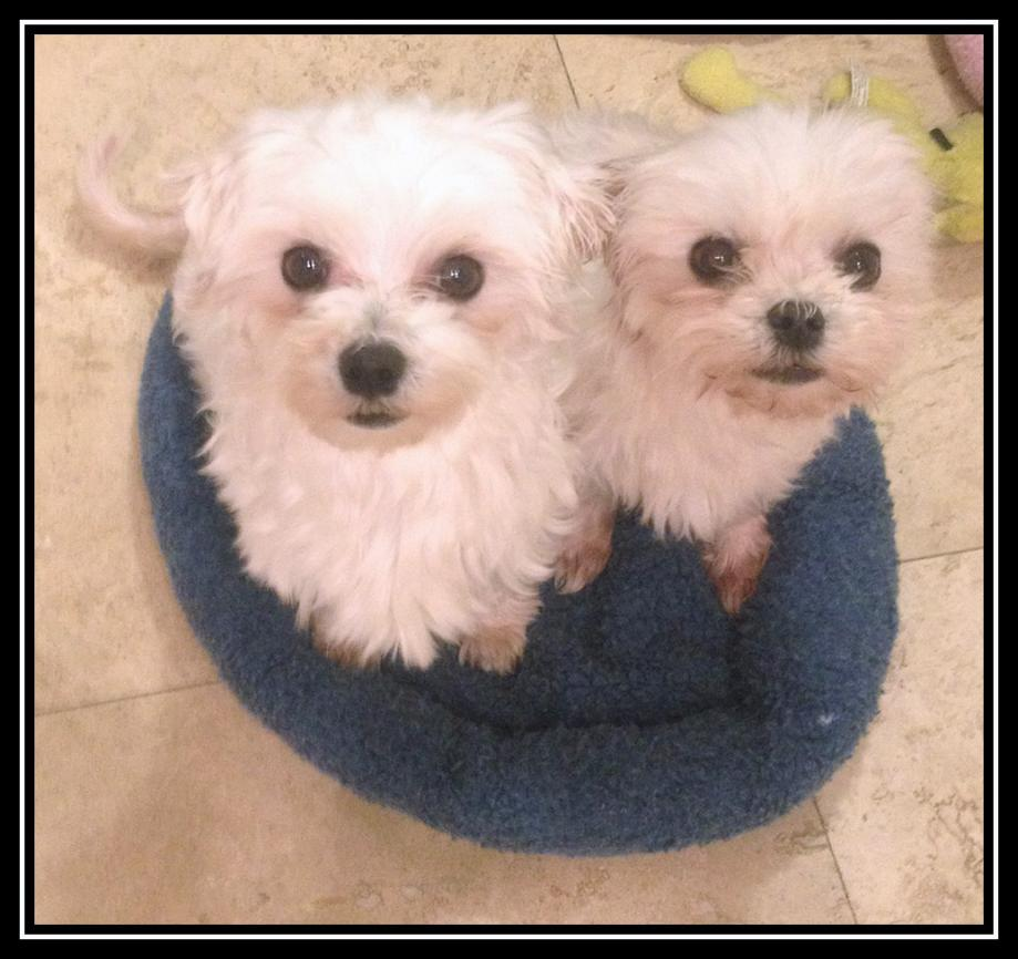 Two little Mill dogs-puppymill-girls-nov.-2012.jpg