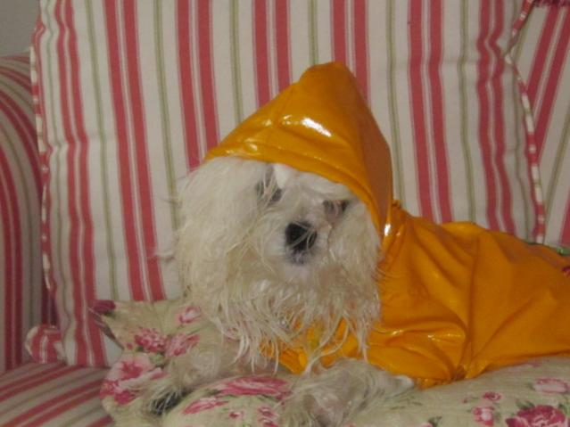 Anyone Find the Perfect Raincoat?-raincoat.jpg