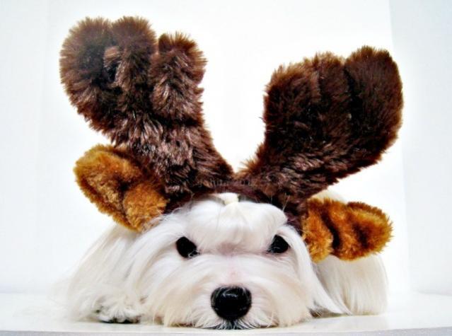 Happy Festivus!!-reindeer2rsfb.jpg