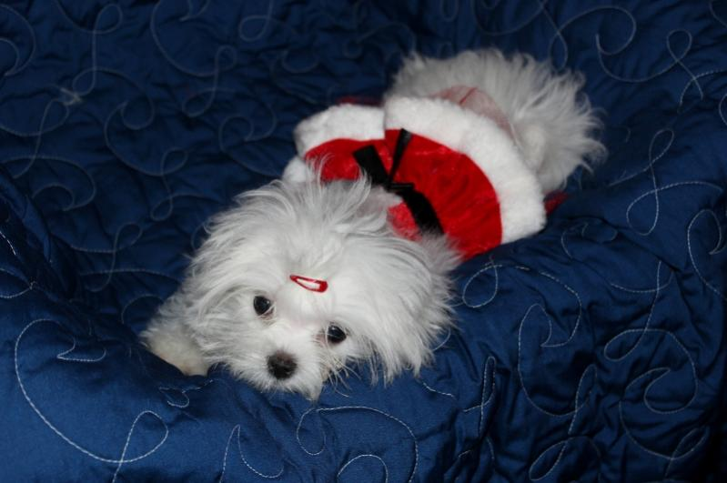 An Early Visit from Santa Paws-skyea-small.jpg