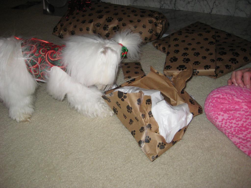 Giovanni's Secret Santa Reveal!-tearingintoellephant.jpg