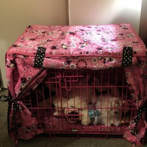 Bella's Crate
